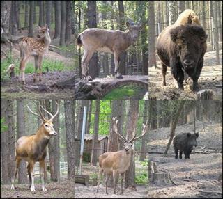 Dikiymir.ru  -фотоархив животные